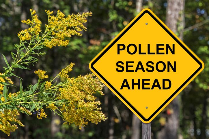 fall seasonal allergies